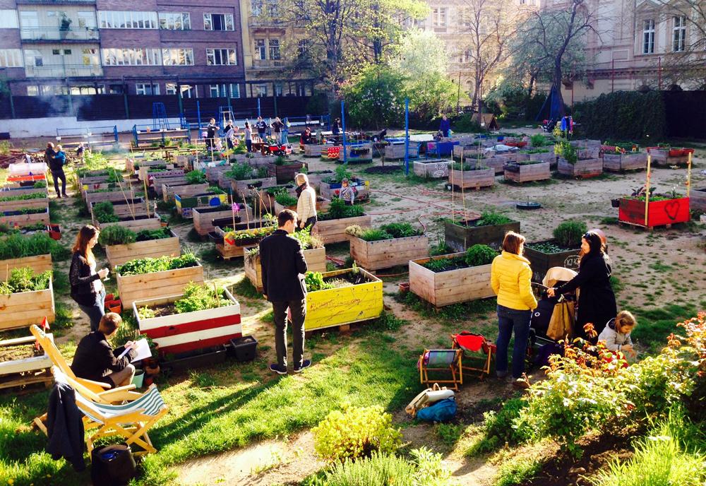 Komunitní zahrada Smetanka, Na Smetance, komunitní zahrady